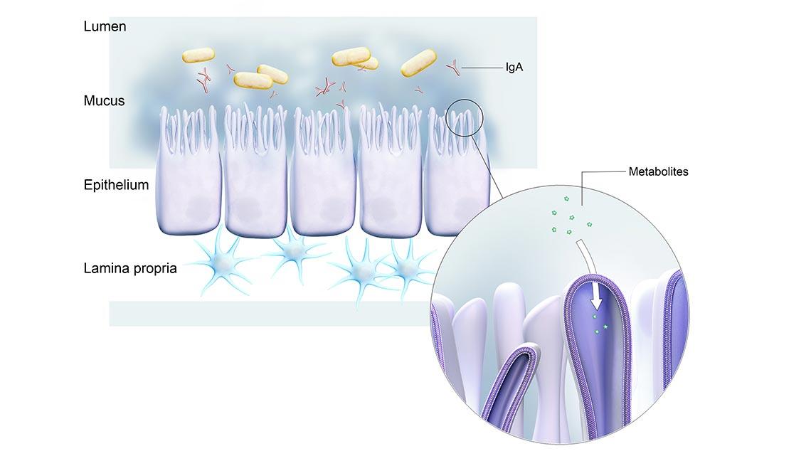 ProbioticsAndGIHealth_concept_031